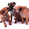 dogshoot2