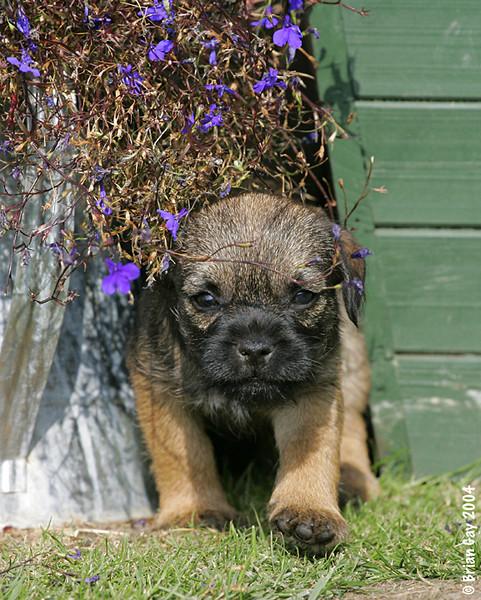 New puppy no problem.