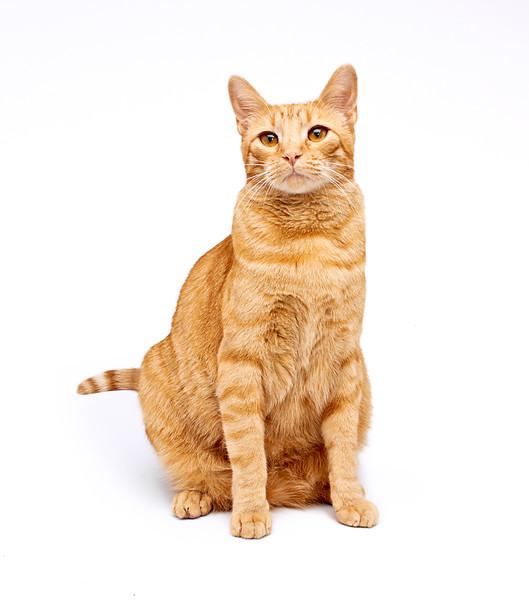 Assisi Cats_James_1836_P