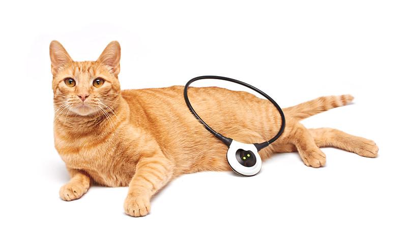Assisi Cats_JamesLoop_1812_P