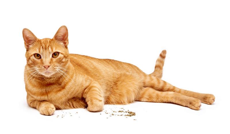 Assisi Cats_James_1855_P