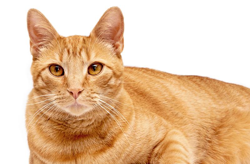 Assisi Cats_James_1854_P