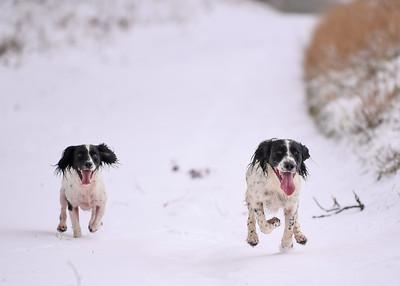 Dogs Jan 2021