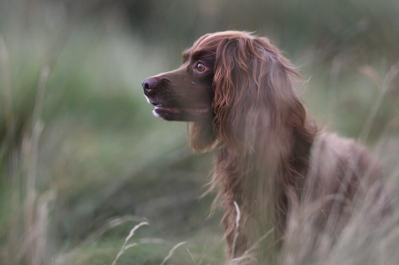 Dog Training, 13th July 2019, water training