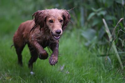 Water Training, Dog Training,