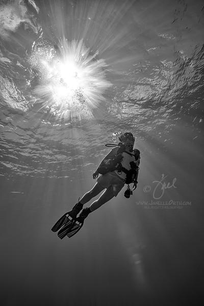 Sunburst Diver BW   ©2014 Janelle Orth