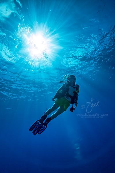Sunburst Diver   ©2014 Janelle Orth