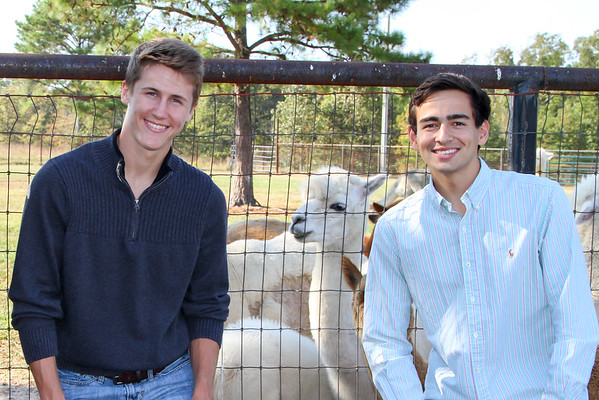Alpaca Farm-186