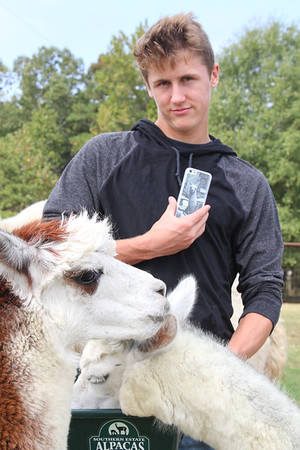 Alpaca Farm-13