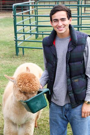 Alpaca Farm-11