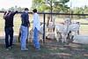 Alpaca Farm-183