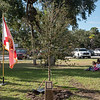 giles_gretchen_beachland_tree-0791