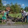 giles_gretchen_cultural arts tree-0264