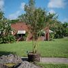 giles_gretchen_cultural arts tree-0223