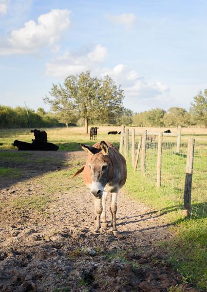 equestrian_photography_vero_beach_family_Gretchen_Giles_photography-5884
