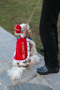 Dog Lovers 2014-0904