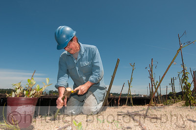 Bill Berry with Natural Recovery, planting willow sticks on Gunderson rivebank.