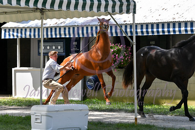 Keeneland September Yearling Sale Day 2 - 9/12/2017