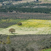 Galilee View 025