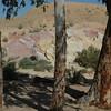 Negev Desert 019