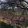 Efrat Wadi Spring 09 - 008