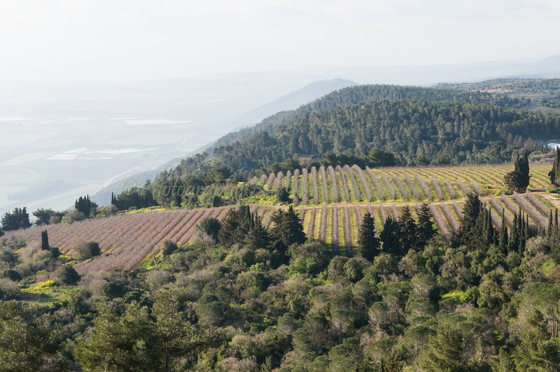 Eastern Galilee Hilltop  046