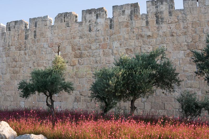 Old City Walls 416