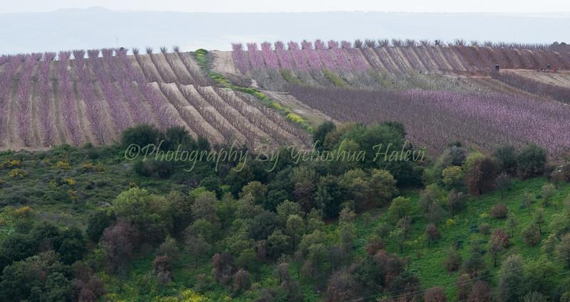 Metula Orchards 011