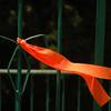 Orange - Gush Katif 014