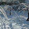 EFRAT - snow scenes-89