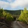 Birrya Forest 138