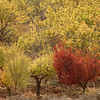 Gush Etzion Fall 2005 wadi colors 3331