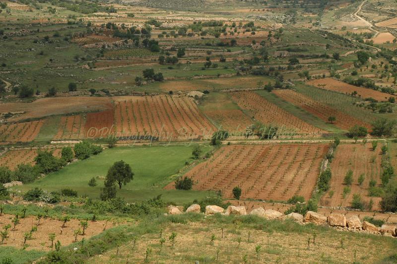 Efrat - Wadi 125