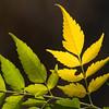 Leaves 047