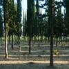 Birrya Forest 102