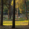 Birya Forest 138