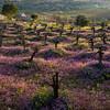 Efrat Wadi Spring 09 - 007