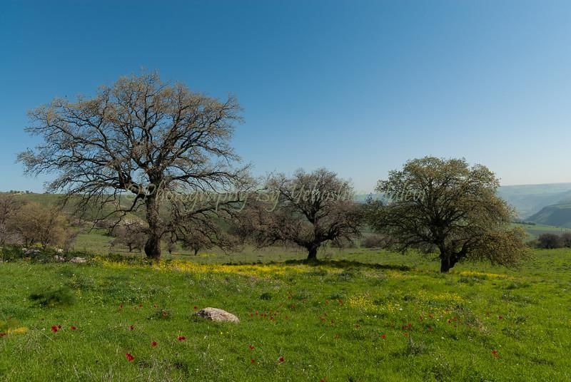 Golan Scenics 2008-190