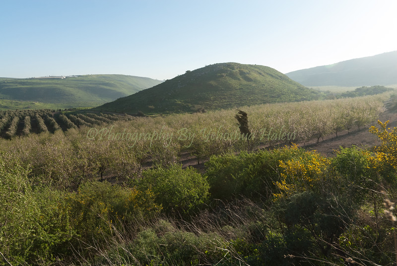 Golan Scenics 2008-142
