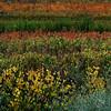 Galilee Fall 06-104