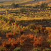 Gush Etzion Fall 2005 wadi colors 3256