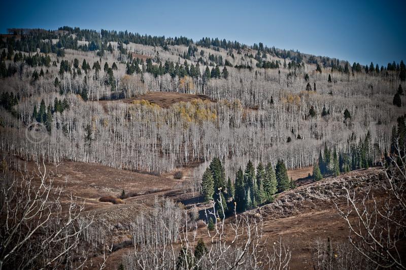 2010 Elk Hunt-0062