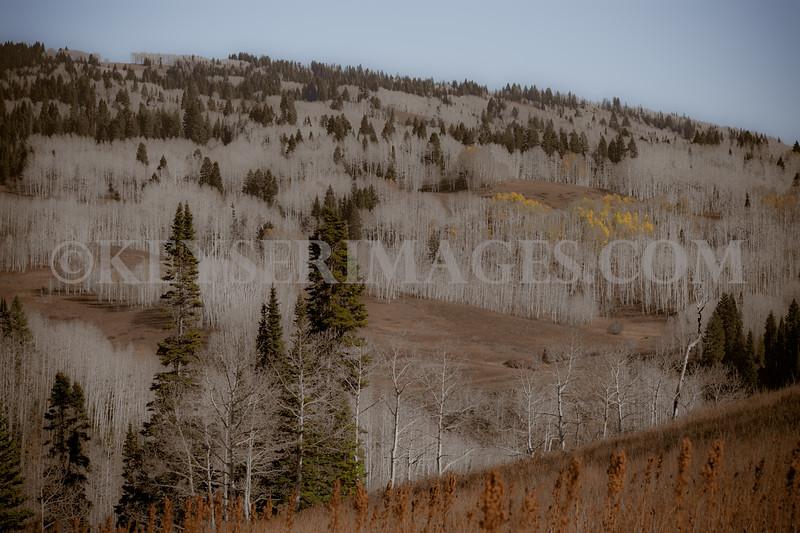 2010 Elk Hunt-0039