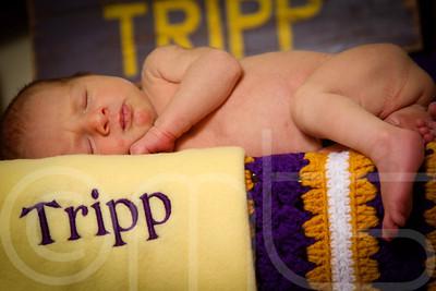 TRIPP-019