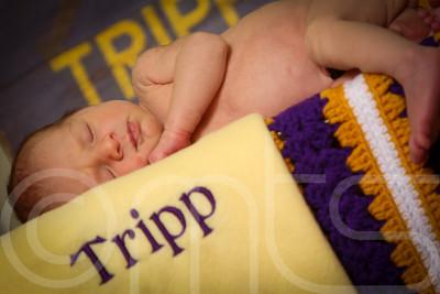 TRIPP-024