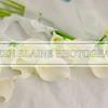 Bradley_Shamika_Wedding10020