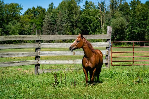 Bowser Quarter Horses