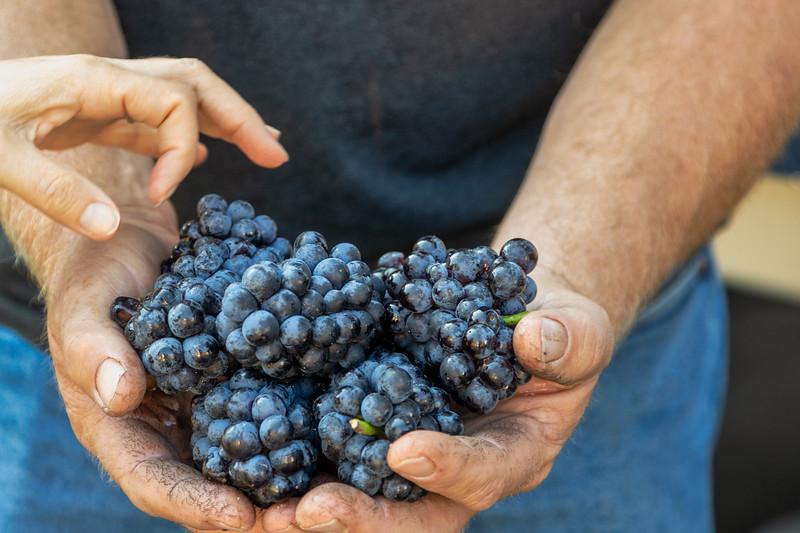 2020September_Boeger Winery Commercial_125-Edit-2