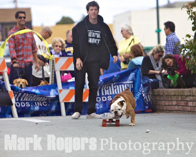 Tillman the Skateboarding Dog on a roll