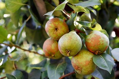 Hooverville Orchard-0668-Edit